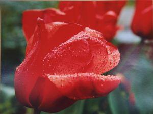 F1-3 Dopo la pioggia un fiore